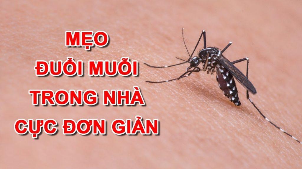 Mẹo đuổi muỗi trong nhà cực đơn giản